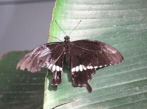Schmetterlingshaus (16)