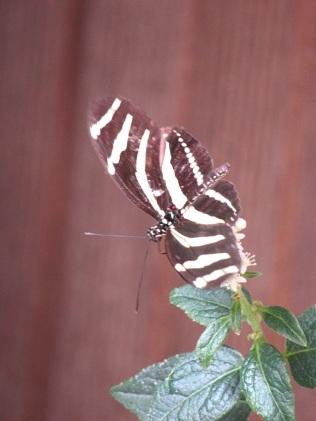 Schmetterlingshaus (17)